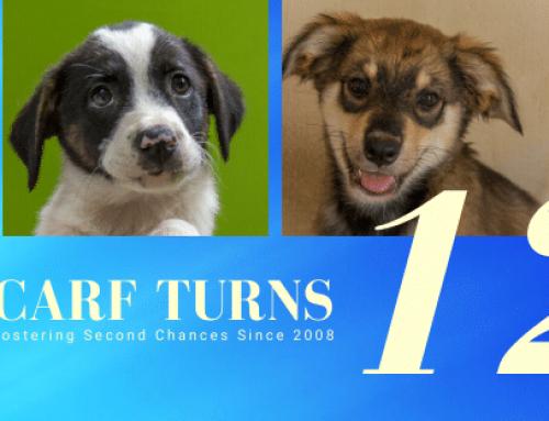 Curaçao Animal Rights Foundation staat stil bij 12-jarig bestaan