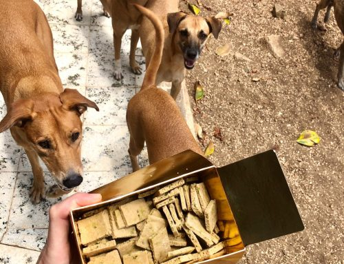 Best doggy treats on the rock !…