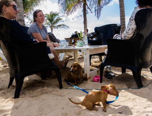 Dog Friendly Restaurants in Curaçao: Dining Out with Your Dog