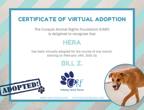 Curaçao dog Hera has been virtually adopted on Valentine's Day