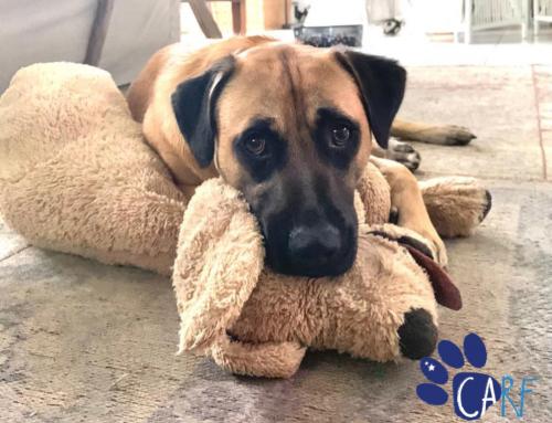 Hond zoekt Baas | Geef jij Guapo uit Curaçao een tweede kans in Nederland?