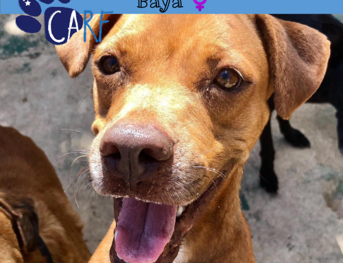 CARFIE Of The Week: Baya