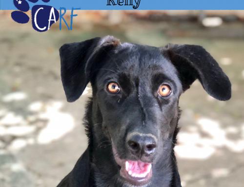 CARFIE Of The Week: Kelly
