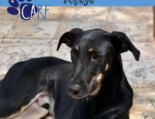 CARFIE Van De Week: Popeye | Hond uit Curaçao zoekt Baas