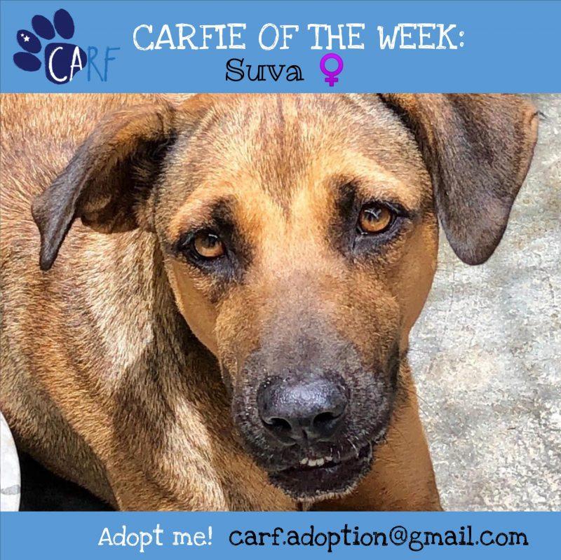 CARFIE Of The Week Suva