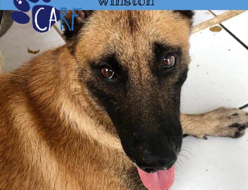 CARFIE van de Week: Winston