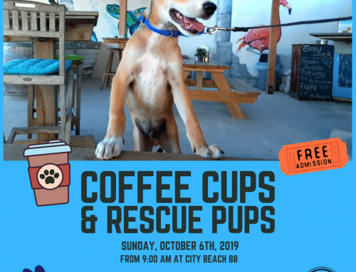 'Coffee Cups & Rescue Pups' at City Beach 88