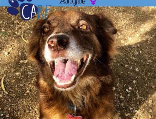 Deze week zetten wij een speciaal hondje in de spotlights! Special Needs CARFIE Angie heef…