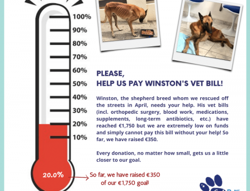 Friends ― we need your help, or more specifically, Winston needs your help. Remember the b…