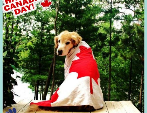Happy Canada Day to our fosters, supporters, and adopters, in or from Canada ― without you…