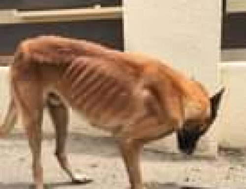 Here we are again… another heartbreaking story of a dog that has been tossed away by th…
