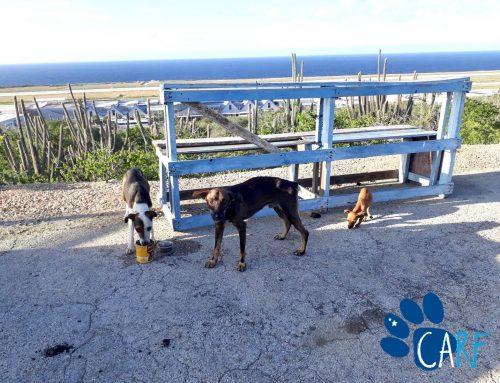 Photographer Eduardo Rescues Dog Family Of Three near Curaçao Airport