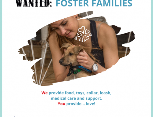 We're looking for foster homes for our puppies, senior dogs, and everything in between! …