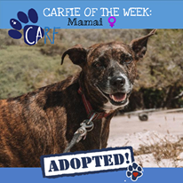 Image may contain: outdoor, text that says 'CARFIE OF THE WEEK: Mamai CARF ADOPTED!'