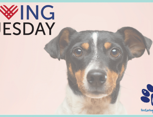 Giving Tuesday | Support the Curaçao Animal Rights Foundation