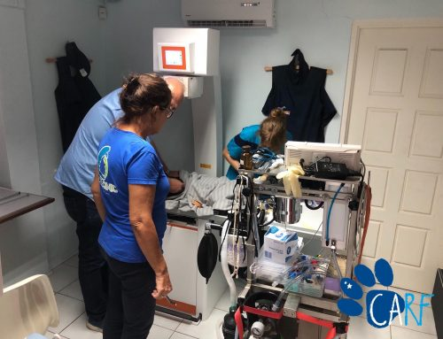 CARF Volunteers rescue Family of Three Dogs at Caracasbaai, Curaçao
