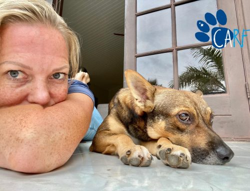 Stray Dog Finally Lets Himself Be Rescued | Dogs of Curaçao