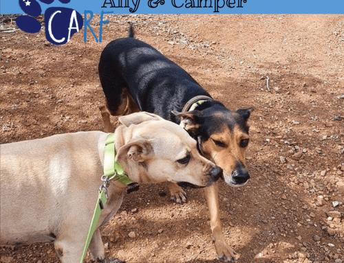 CARFIES Van De Week: Ally en Camper