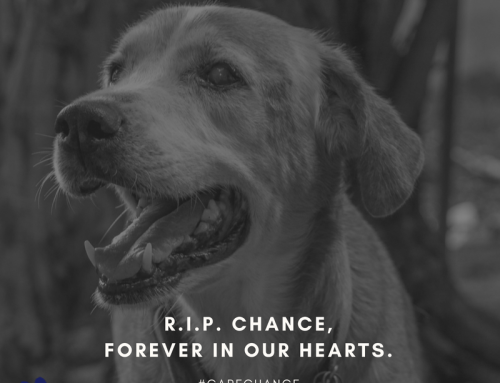 Forever In Our Hearts, Sweet Chance…