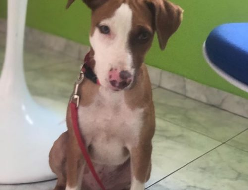 How homeless dog Luther was saved from the streets of Curaçao