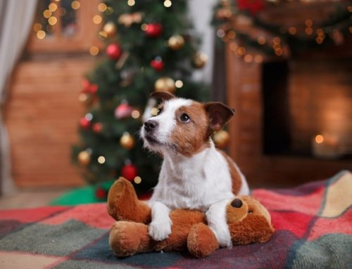 Become a Dog's Secret Santa | CARF's Virtual Adoption Program